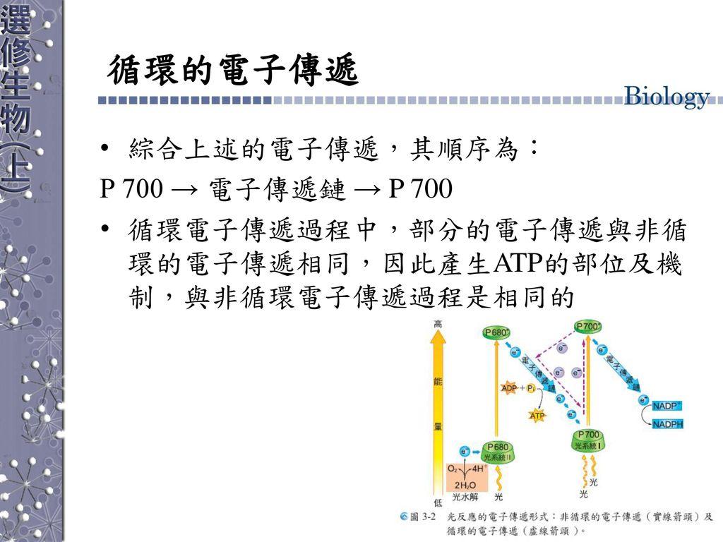 循環的電子傳遞 綜合上述的電子傳遞,其順序為: P 700 → 電子傳遞鏈 → P 700