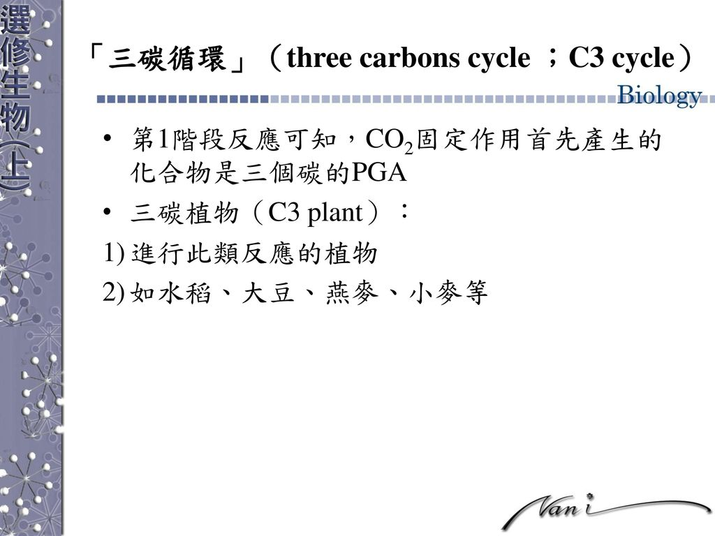 「三碳循環」(three carbons cycle ;C3 cycle)