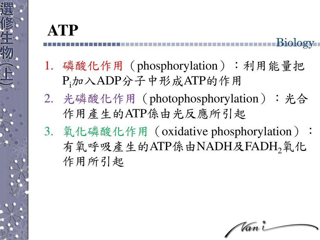 ATP 磷酸化作用(phosphorylation):利用能量把Pi加入ADP分子中形成ATP的作用