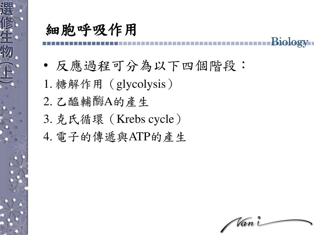 細胞呼吸作用 反應過程可分為以下四個階段: 糖解作用(glycolysis) 乙醯輔 A的產生 克氏循環(Krebs cycle)