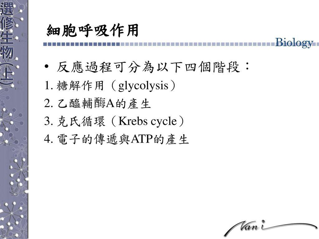 細胞呼吸作用 反應過程可分為以下四個階段: 糖解作用(glycolysis) 乙醯輔 A的產生 克氏循環(Krebs cycle)