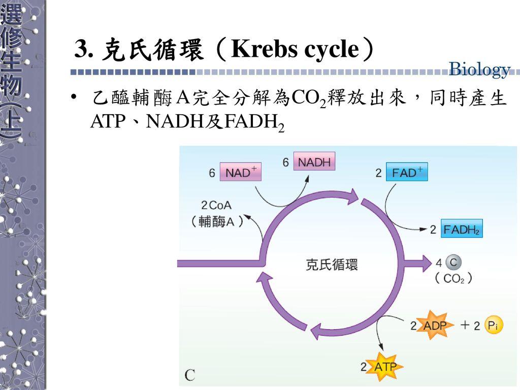 3. 克氏循環(Krebs cycle) 乙醯輔 A完全分解為CO2釋放出來,同時產生ATP、NADH及FADH2