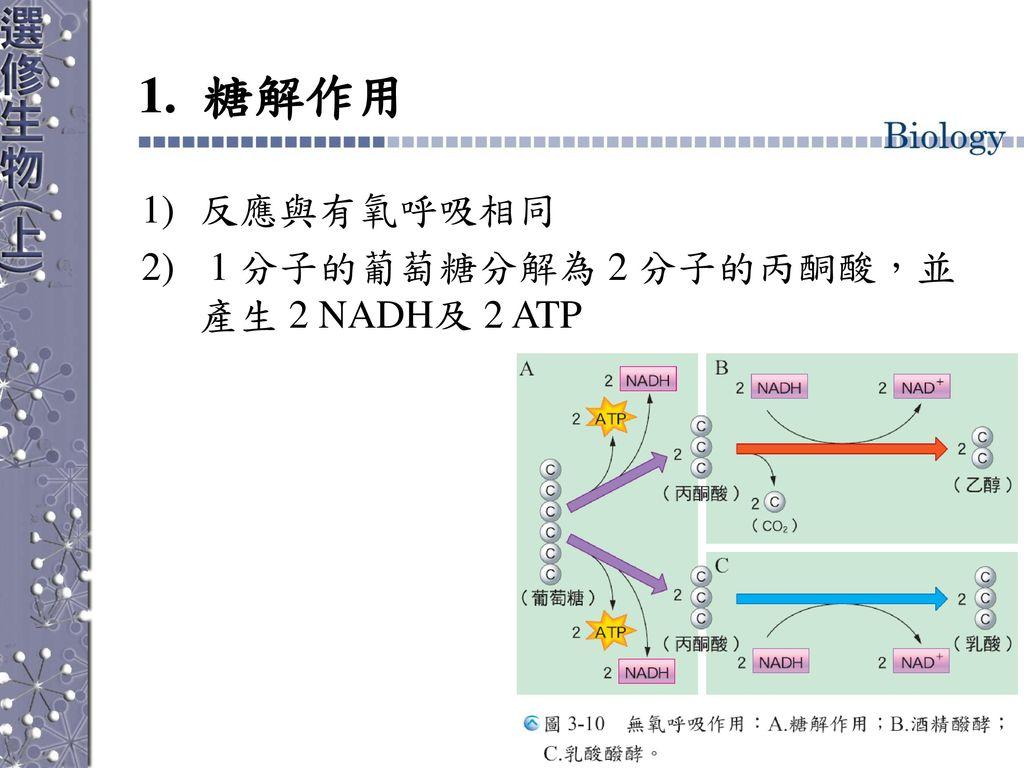 1. 糖解作用 反應與有氧呼吸相同 1 分子的葡萄糖分解為 2 分子的丙酮酸,並產生 2 NADH及 2 ATP