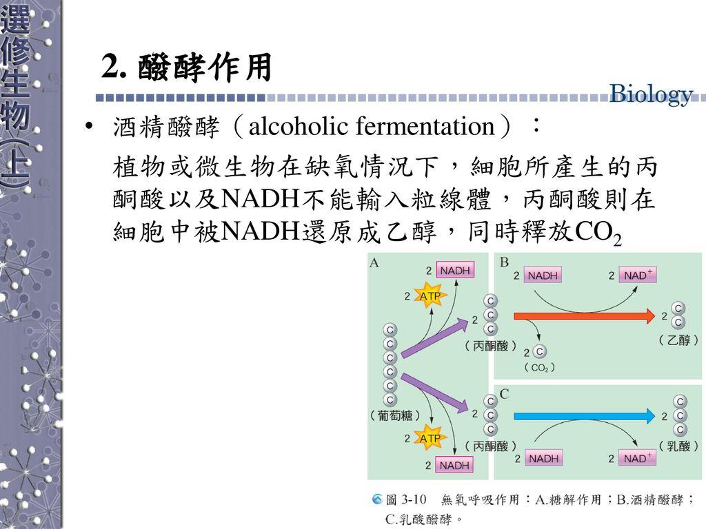 2. 醱酵作用 酒精醱酵(alcoholic fermentation):