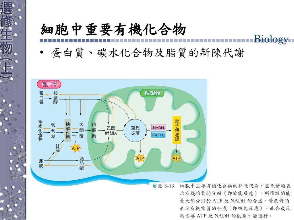 細胞中重要有機化合物 蛋白質、碳水化合物及脂質的新陳代謝
