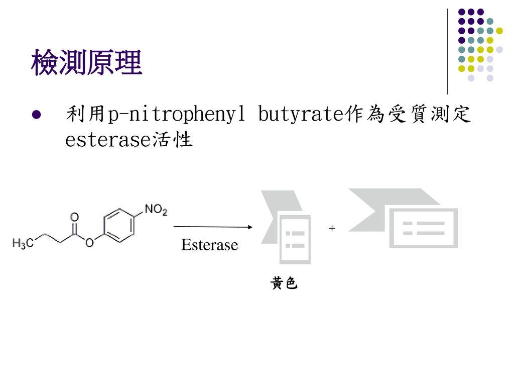 檢測原理 利用p-nitrophenyl butyrate作為受質測定esterase活性 + Esterase 黃色