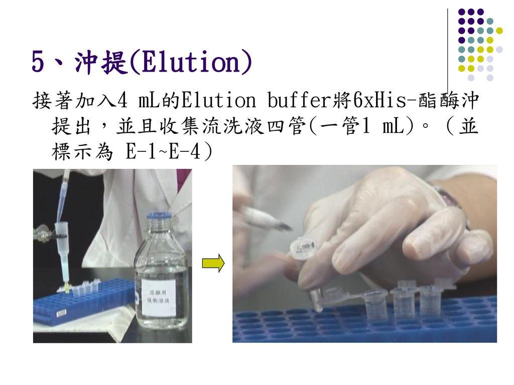 5、沖提(Elution) 接著加入4 mL的Elution buffer將6xHis-酯酶沖提出,並且收集流洗液四管(一管1 mL)。(並標示為 E-1~E-4)