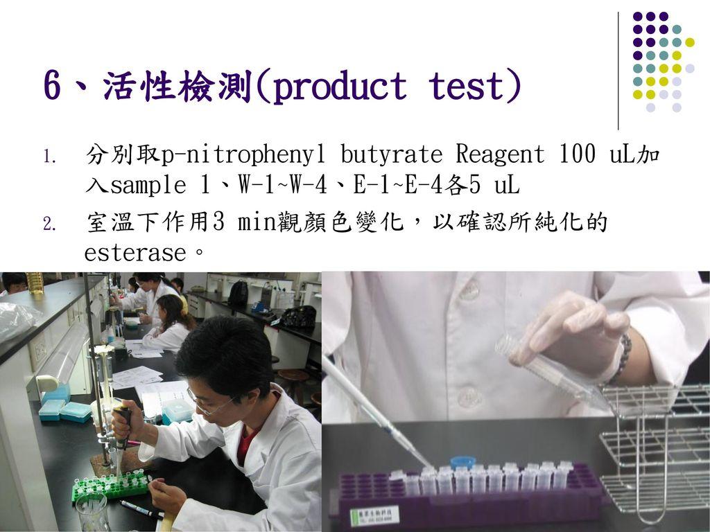 6、活性檢測(product test) 分別取p-nitrophenyl butyrate Reagent 100 uL加入sample 1、W-1~W-4、E-1~E-4各5 uL.
