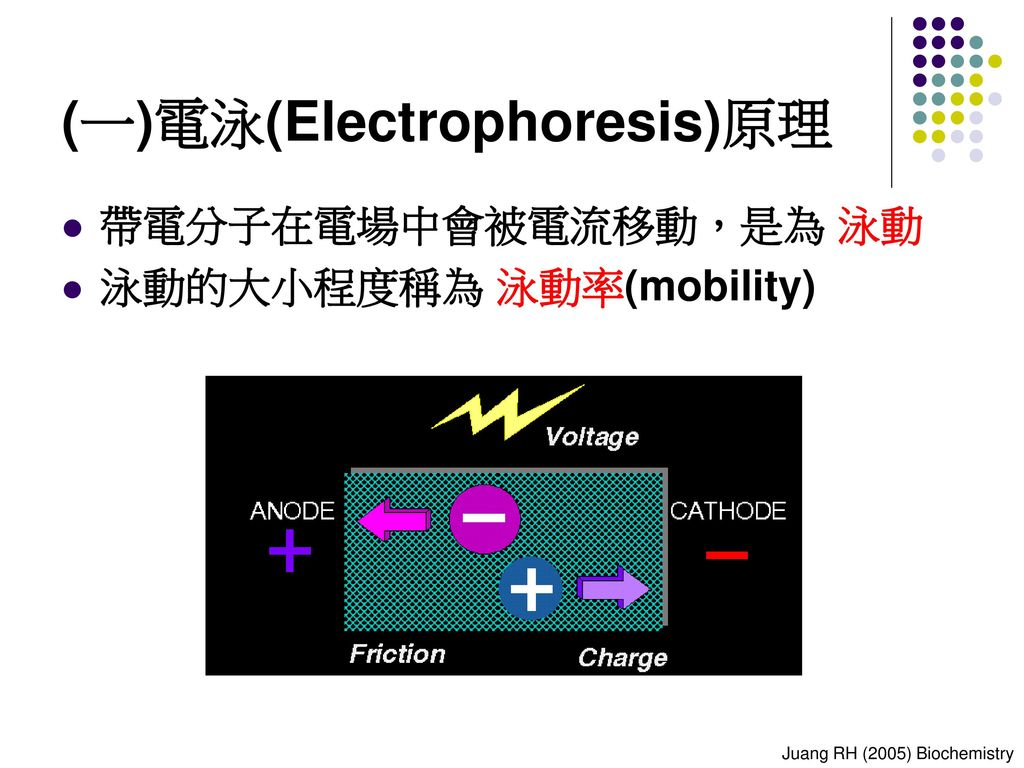 (一)電泳(Electrophoresis)原理