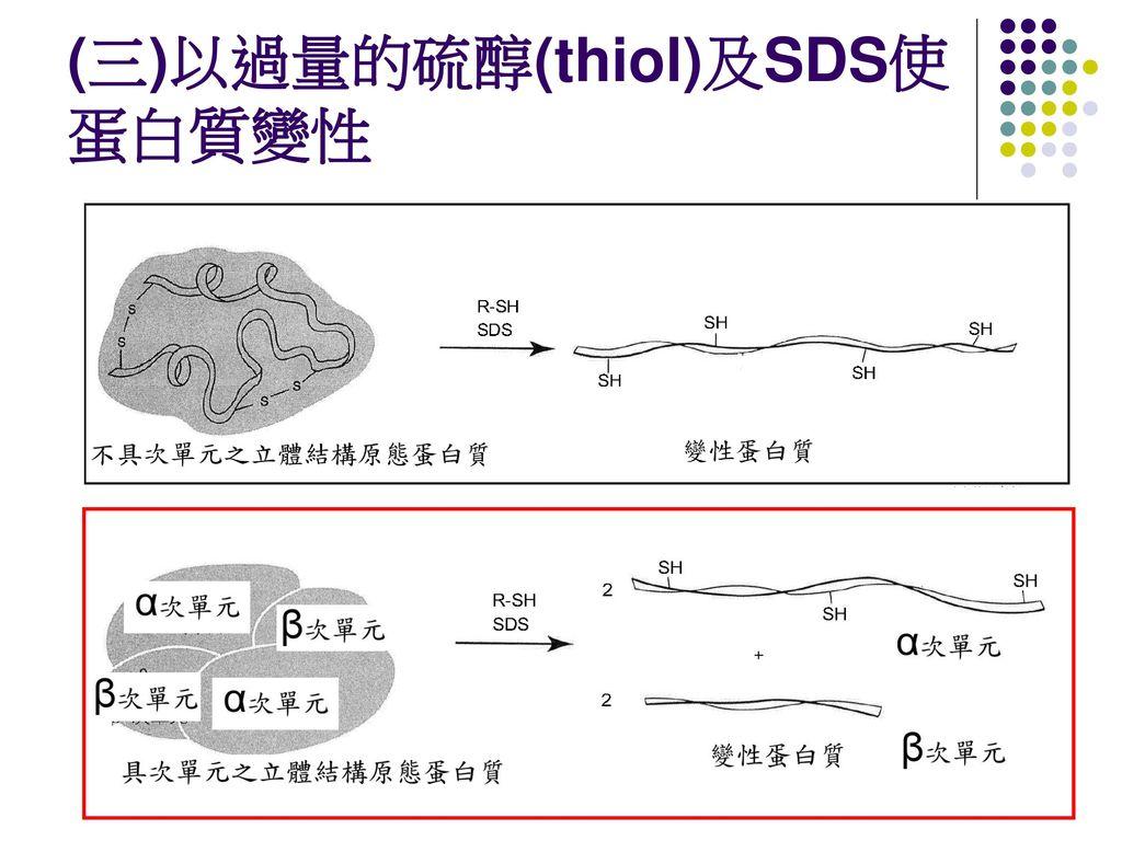 (三)以過量的硫醇(thiol)及SDS使蛋白質變性