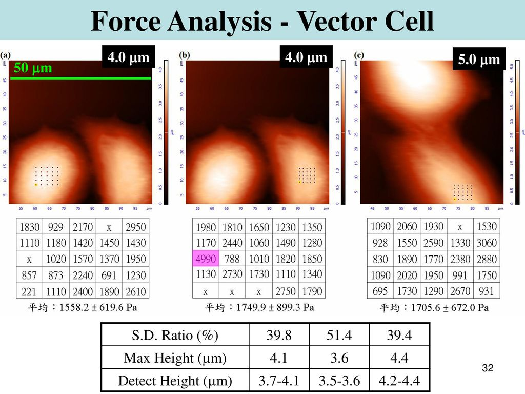 Force Analysis - Vector Cell