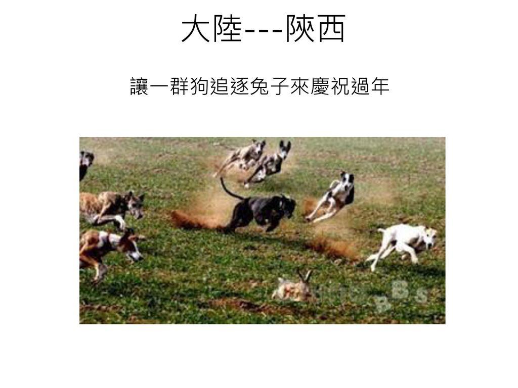大陸---陝西 讓一群狗追逐兔子來慶祝過年