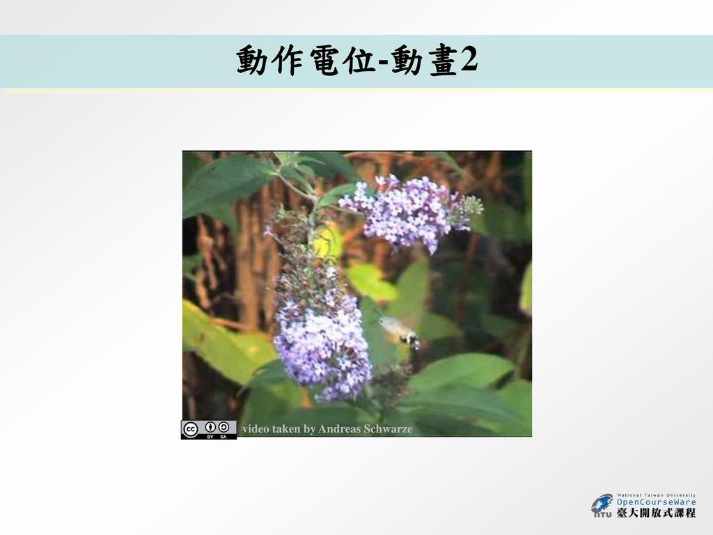 動作電位-動畫2 video taken by Andreas Schwarze
