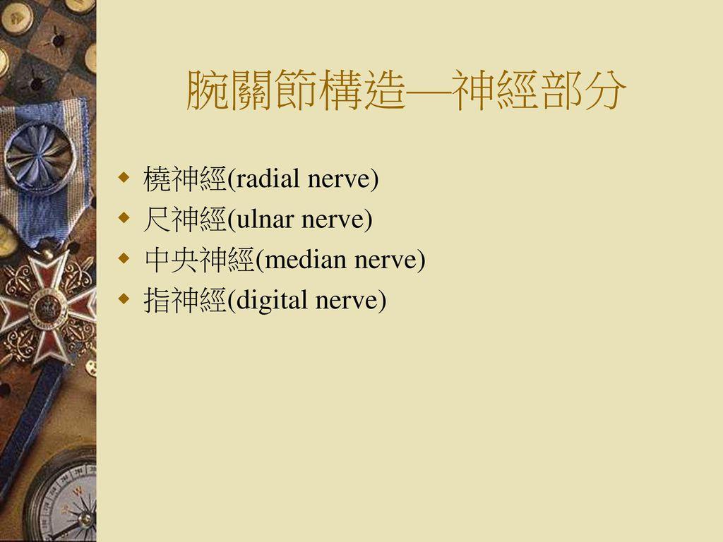 腕關節構造—神經部分 橈神經(radial nerve) 尺神經(ulnar nerve) 中央神經(median nerve)