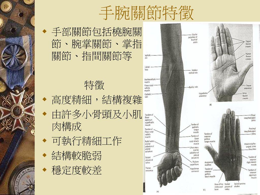 手腕關節特徵 手部關節包括橈腕關節、腕掌關節、掌指關節、指間關節等 特徵 高度精細,結構複雜 由許多小骨頭及小肌肉構成 可執行精細工作