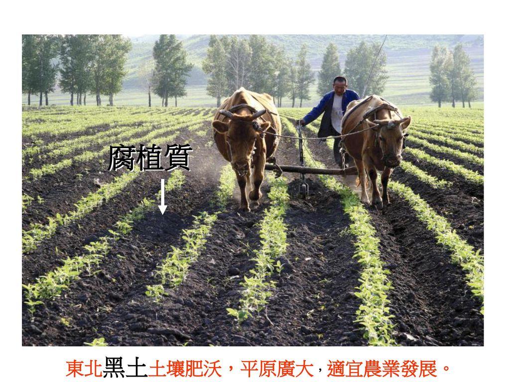 腐植質 東北黑土土壤肥沃,平原廣大,適宜農業發展。
