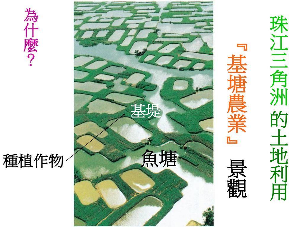 為什麼? 珠江三角洲 的土地利用 『基塘農業』 景觀 基堤 魚塘 種植作物
