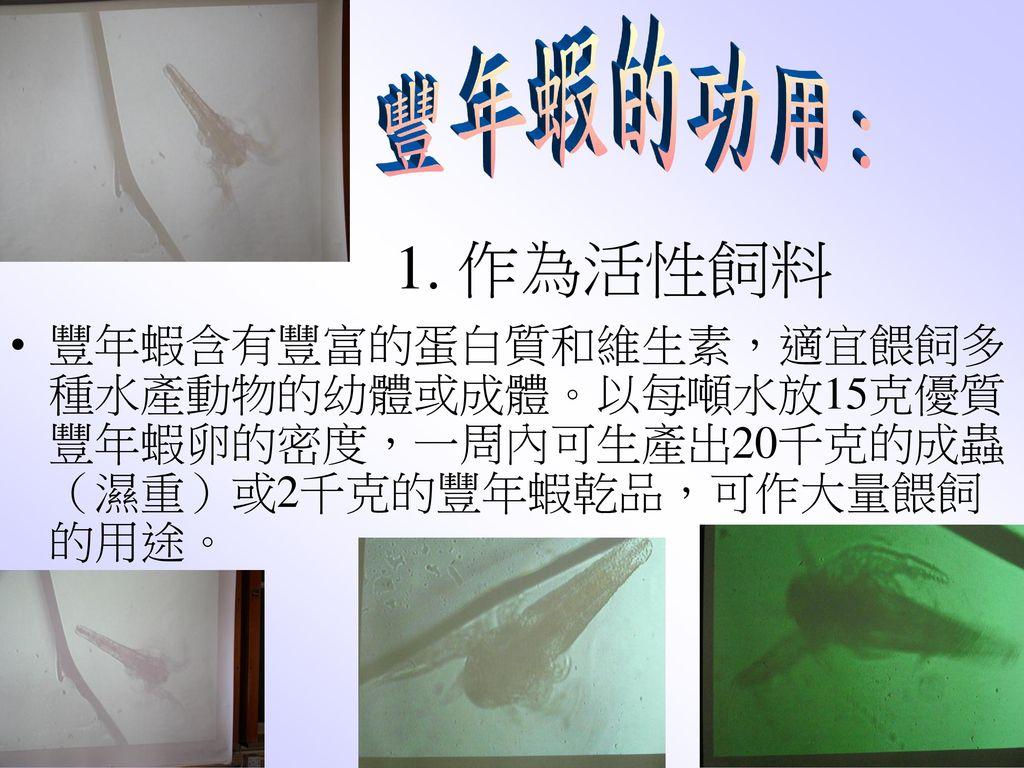 豐年蝦的功用: 1. 作為活性飼料.