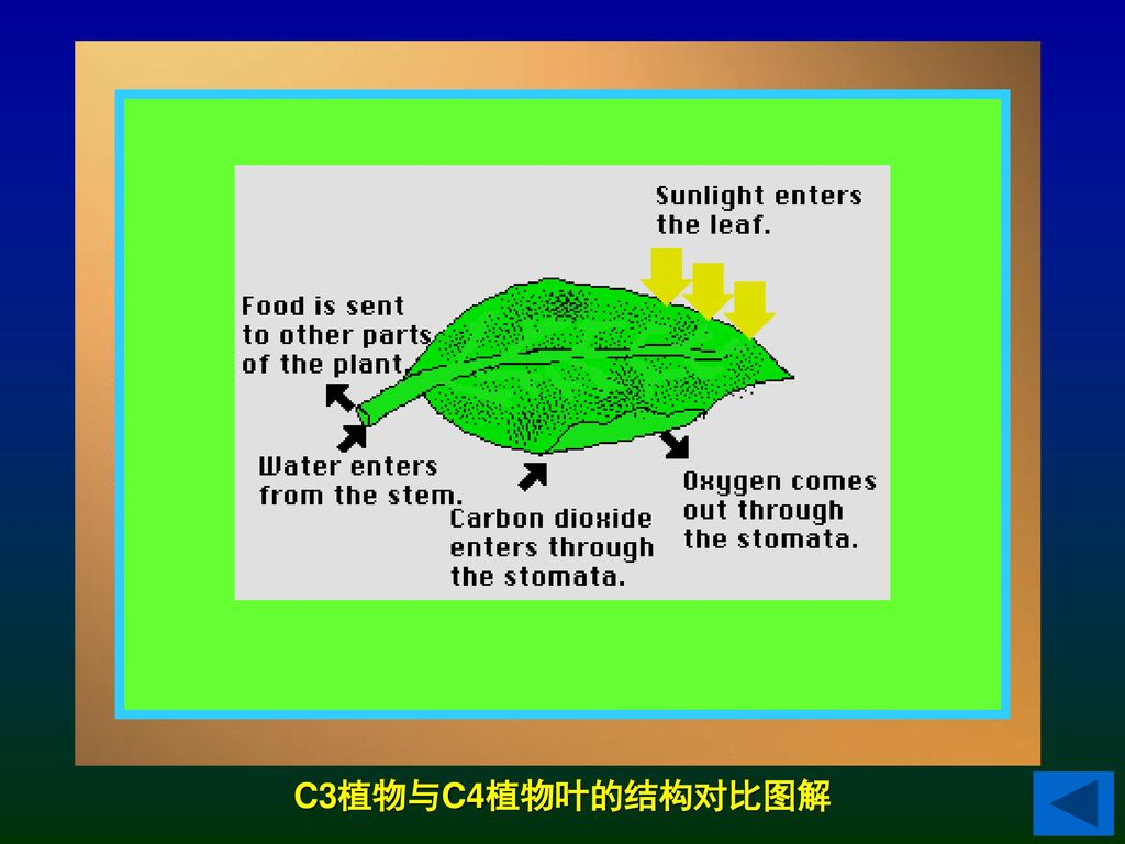Chloroplast and Photosynthesis