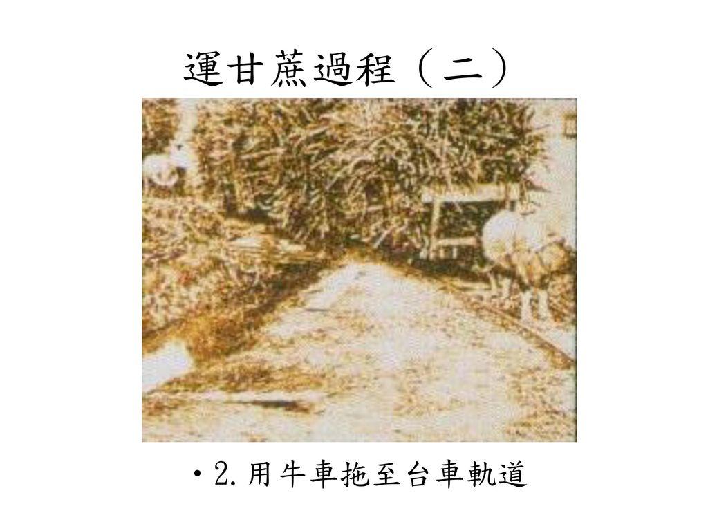 運甘蔗過程(二) 2.用牛車拖至台車軌道