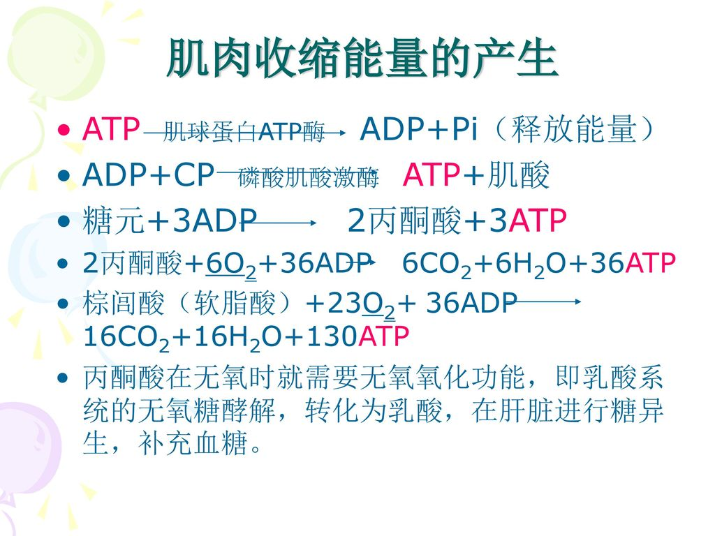 肌肉收缩能量的产生 ATP 肌球蛋白ATP酶 ADP+Pi(释放能量) ADP+CP 磷酸肌酸激酶 ATP+肌酸