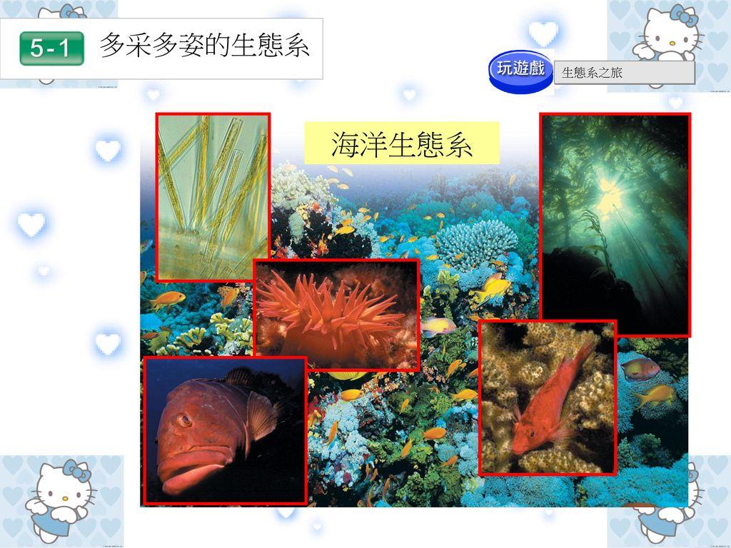 多采多姿的生態系 生態系之旅 海洋生態系