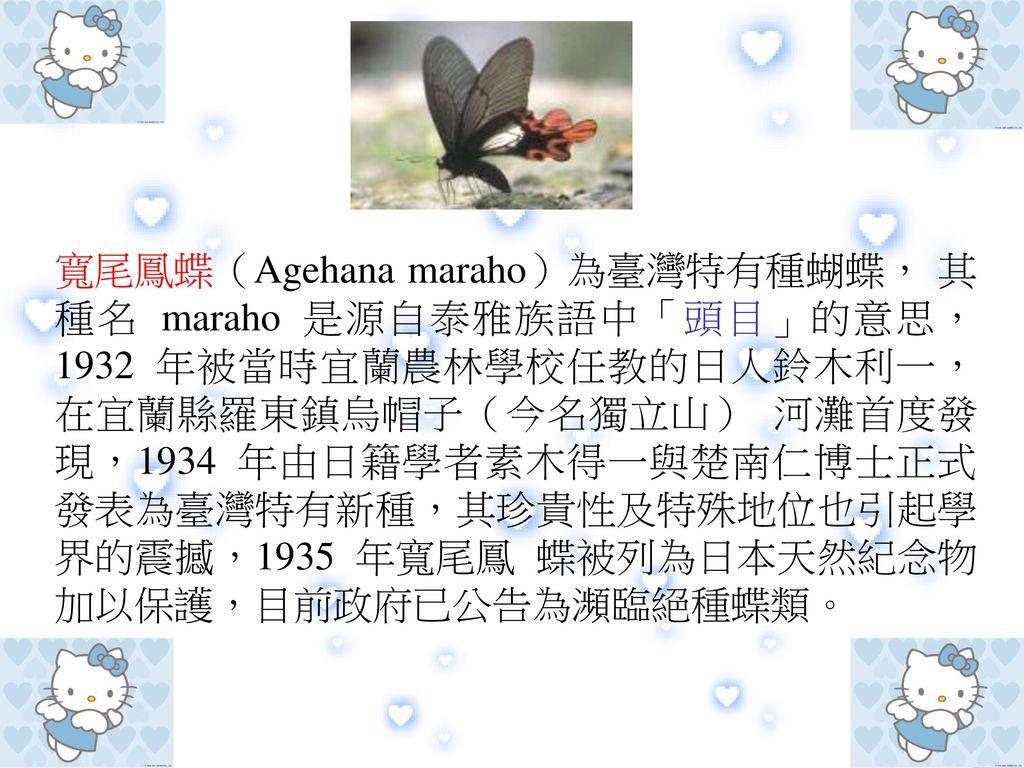 寬尾鳳蝶(Agehana maraho)為臺灣特有種蝴蝶, 其種名 maraho 是源自泰雅族語中「頭目」的意思,1932 年被當時宜蘭農林學校任教的日人鈴木利一,在宜蘭縣羅東鎮烏帽子(今名獨立山) 河灘首度發現,1934 年由日籍學者素木得一與楚南仁博士正式發表為臺灣特有新種,其珍貴性及特殊地位也引起學界的震撼,1935 年寬尾鳳 蝶被列為日本天然紀念物加以保護,目前政府已公告為瀕臨絕種蝶類。
