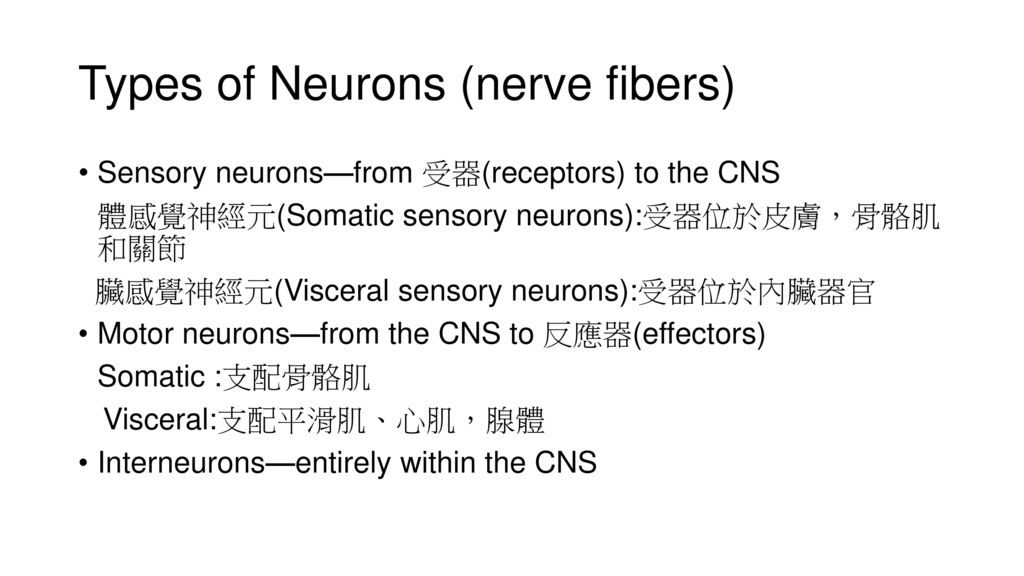 Types of Neurons (nerve fibers)