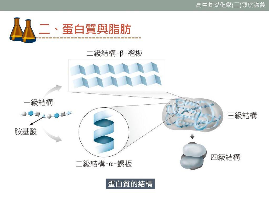 二、蛋白質與脂肪 蛋白質的結構