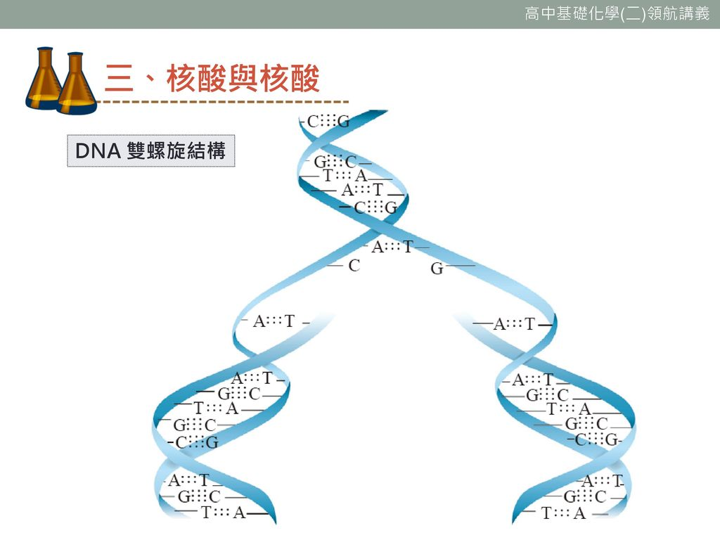 三、核酸與核酸 DNA 雙螺旋結構