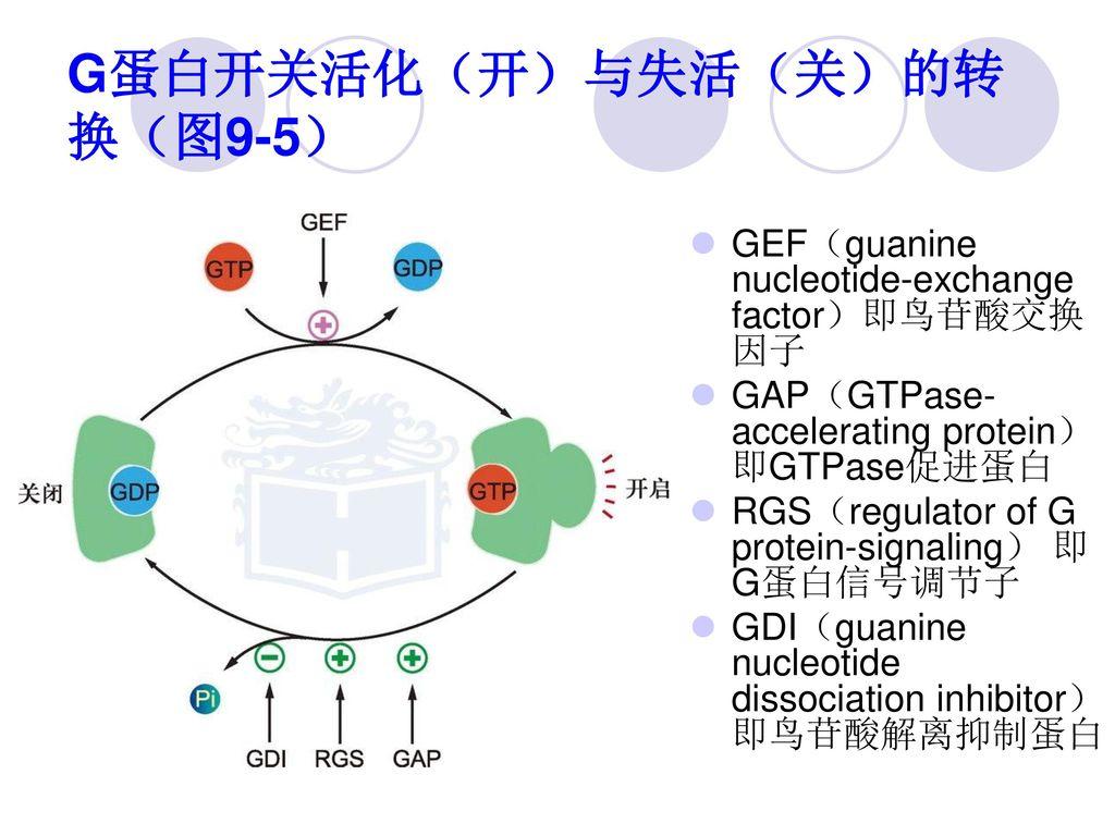 G蛋白开关活化(开)与失活(关)的转换(图9-5)