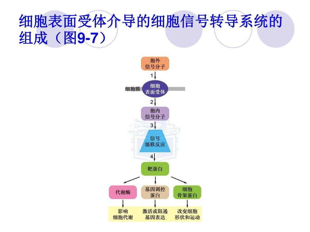 细胞表面受体介导的细胞信号转导系统的组成(图9-7)