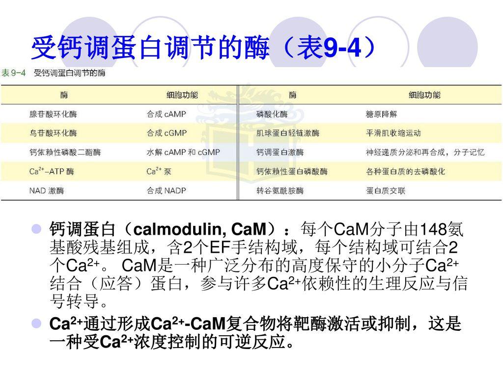 受钙调蛋白调节的酶(表9-4) 钙调蛋白(calmodulin, CaM):每个CaM分子由148氨基酸残基组成,含2个EF手结构域,每个结构域可结合2个Ca2+。 CaM是一种广泛分布的高度保守的小分子Ca2+结合(应答)蛋白,参与许多Ca2+依赖性的生理反应与信号转导。