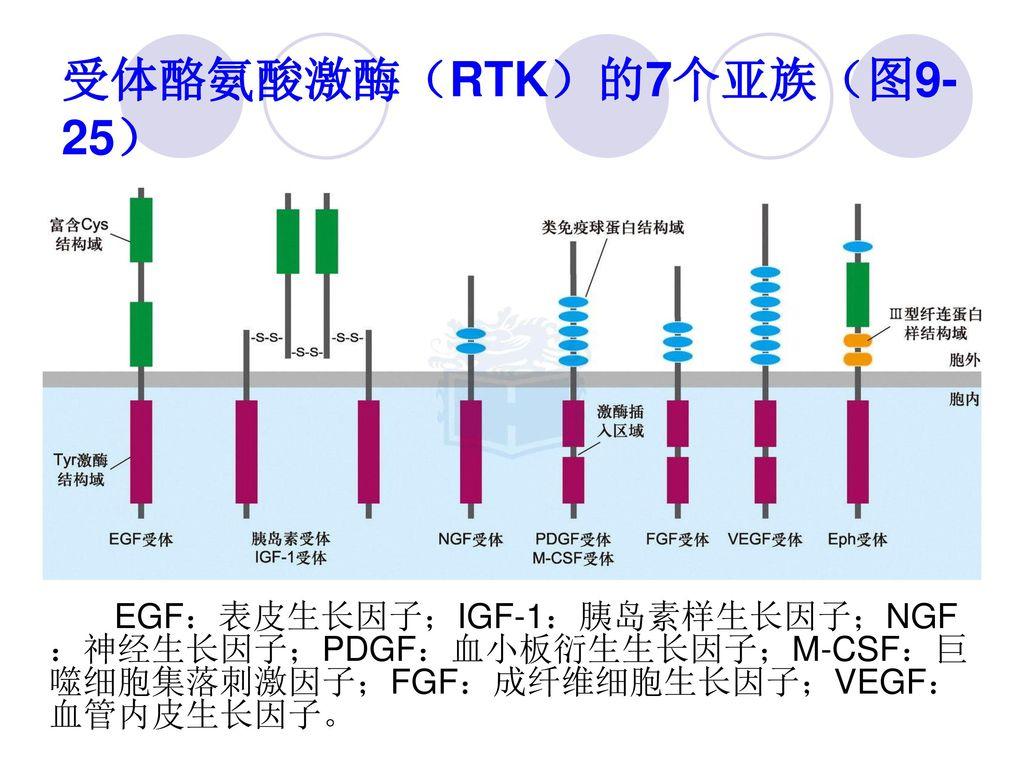 受体酪氨酸激酶(RTK)的7个亚族(图9-25)