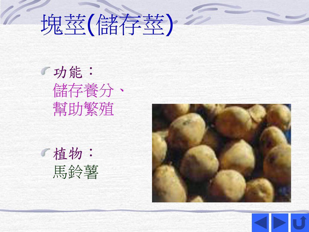 塊莖(儲存莖) 功能: 儲存養分、 幫助繁殖 植物: 馬鈴薯