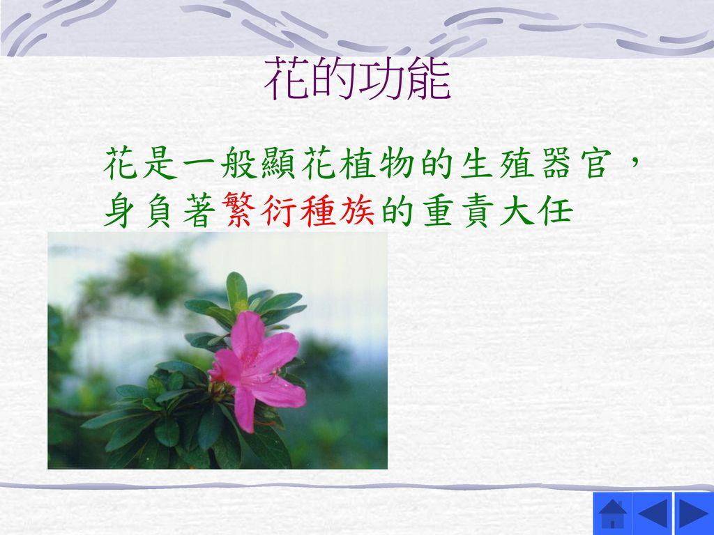 花的功能 花是一般顯花植物的生殖器官,身負著繁衍種族的重責大任