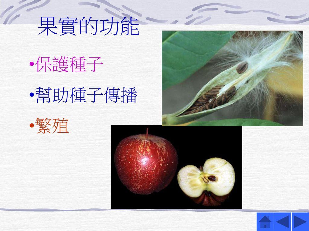 果實的功能 保護種子 幫助種子傳播 繁殖