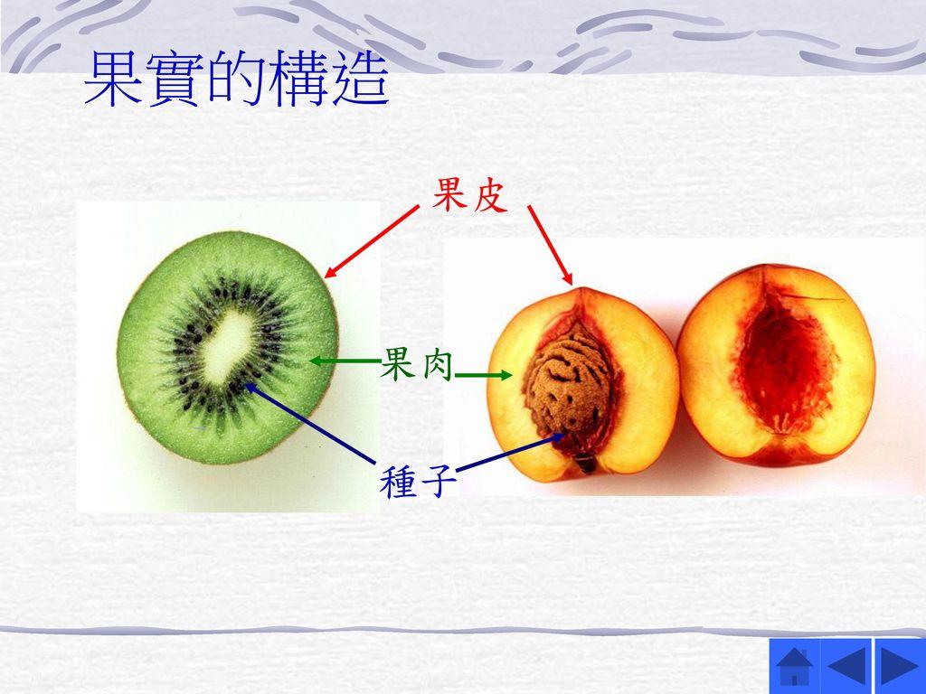 果實的構造 果皮.