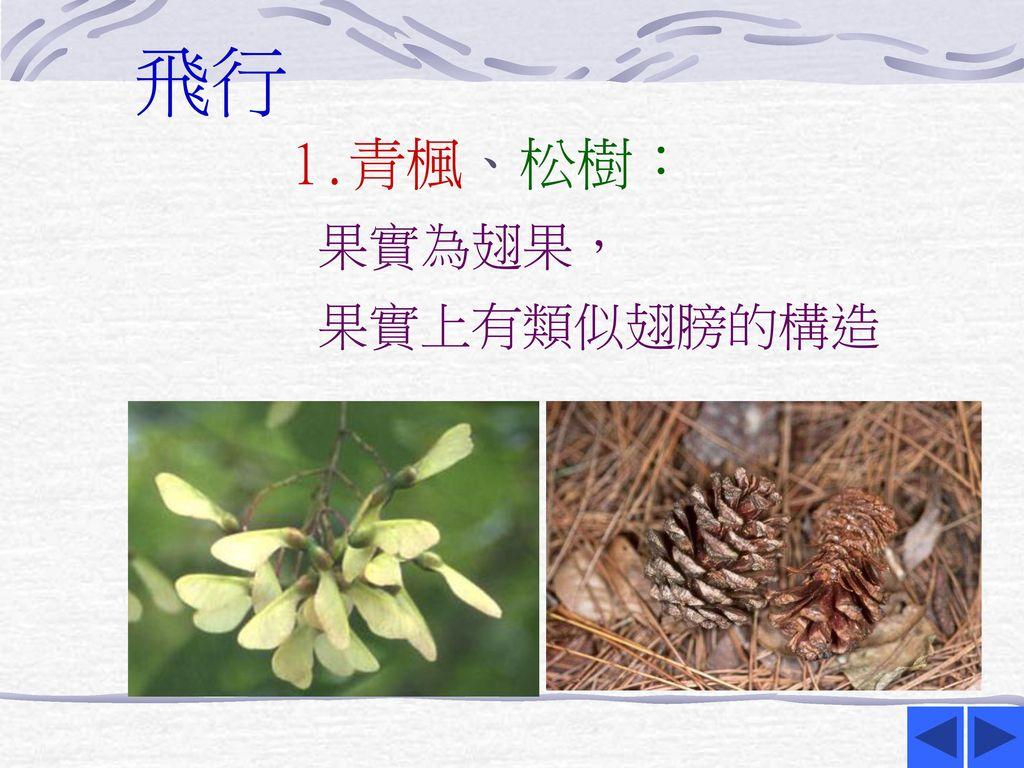 飛行 1.青楓、松樹: 果實為翅果, 果實上有類似翅膀的構造
