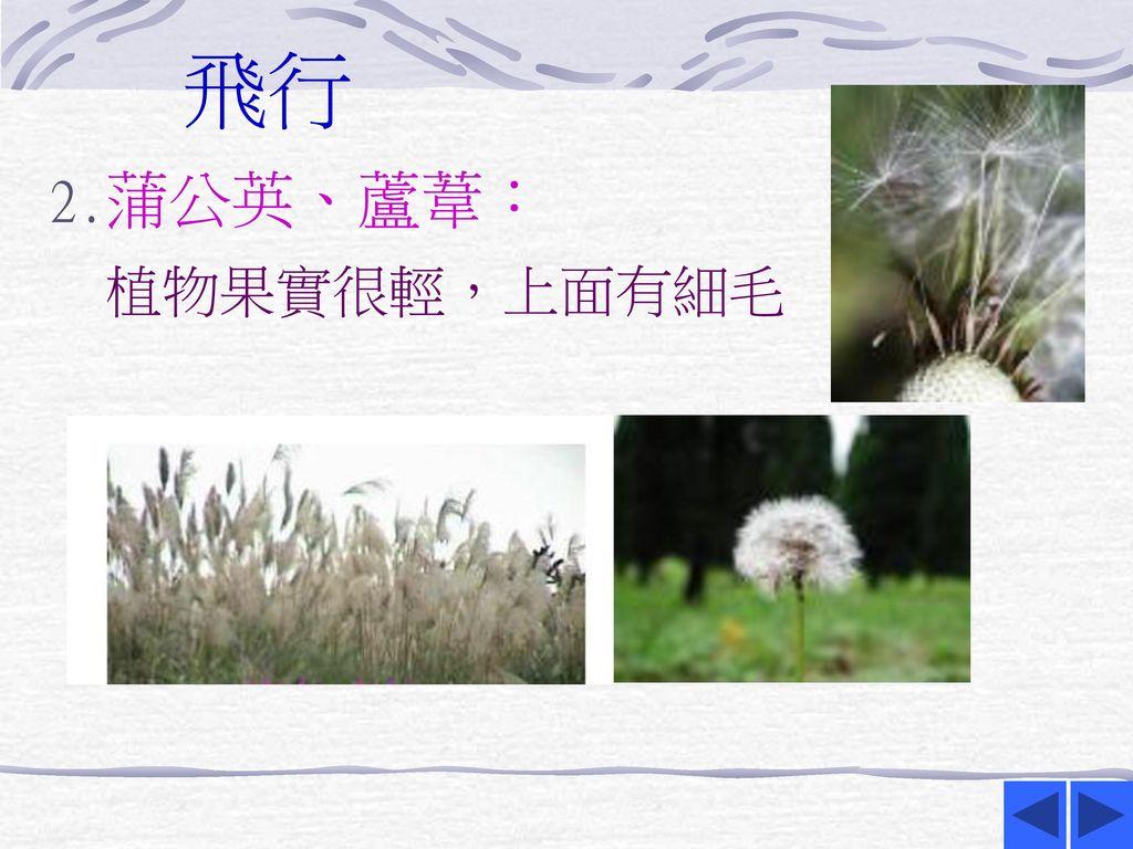 飛行 2.蒲公英、蘆葦: 植物果實很輕,上面有細毛