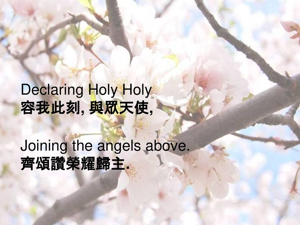 Declaring Holy Holy 容我此刻, 與眾天使, Joining the angels above. 齊頌讚榮耀歸主.