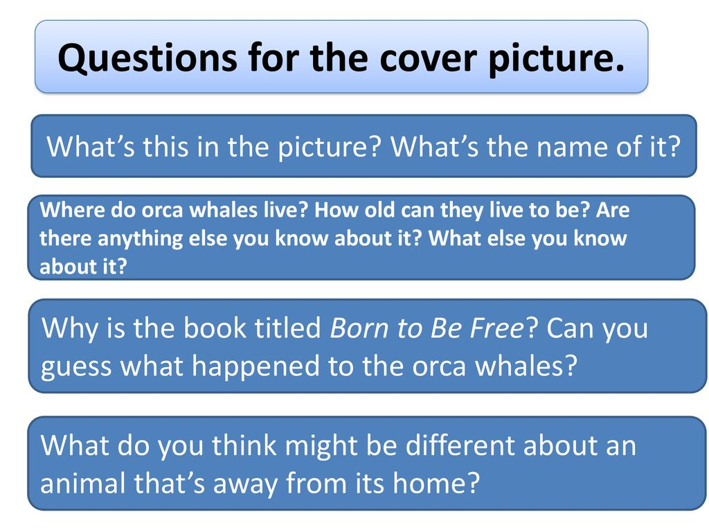 Questions for the cover picture.