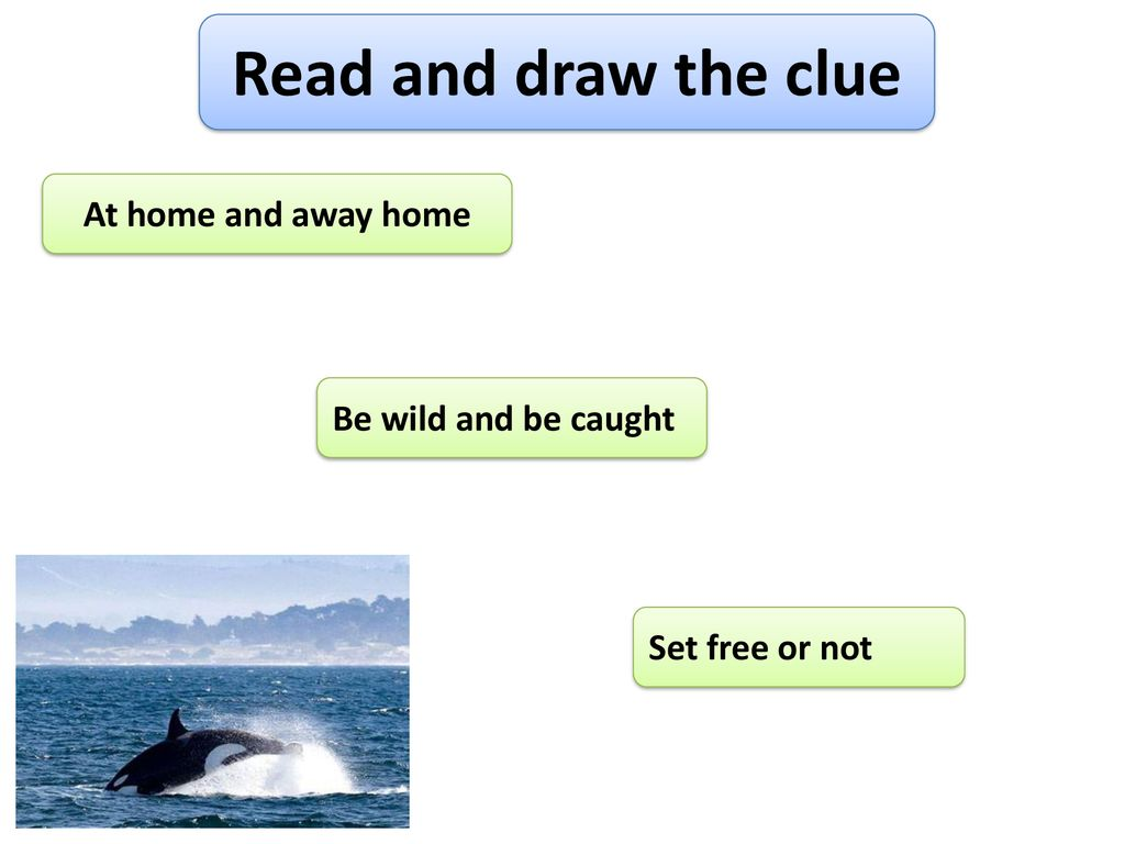 Read and draw the clue At home and away home Be wild and be caught