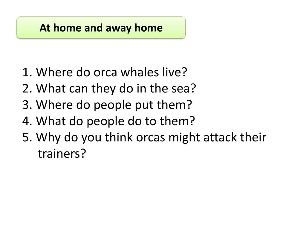 1. Where do orca whales live 2. What can they do in the sea