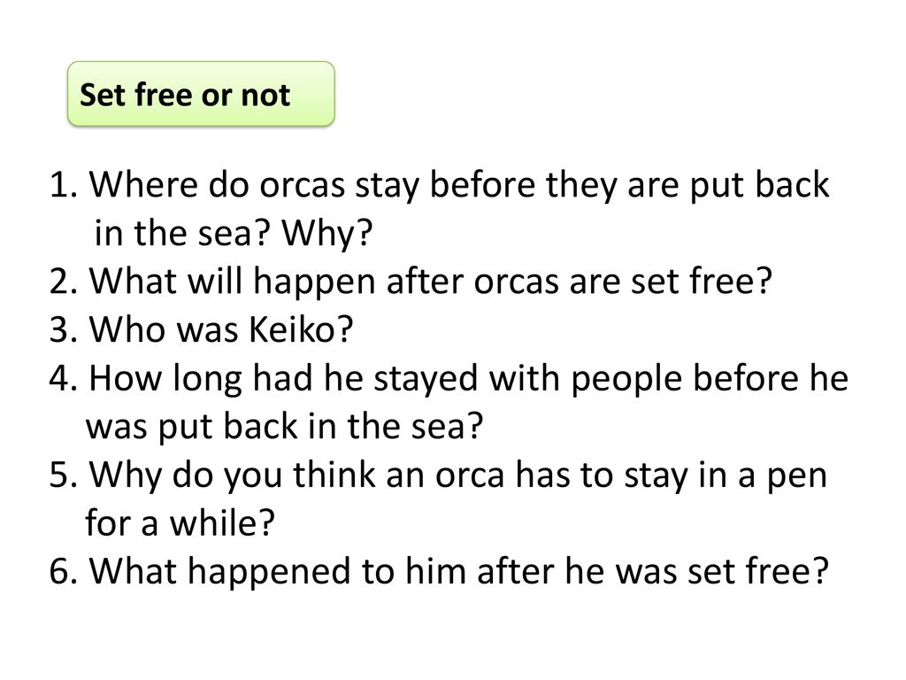 1. Where do orcas stay before they are put back in the sea Why
