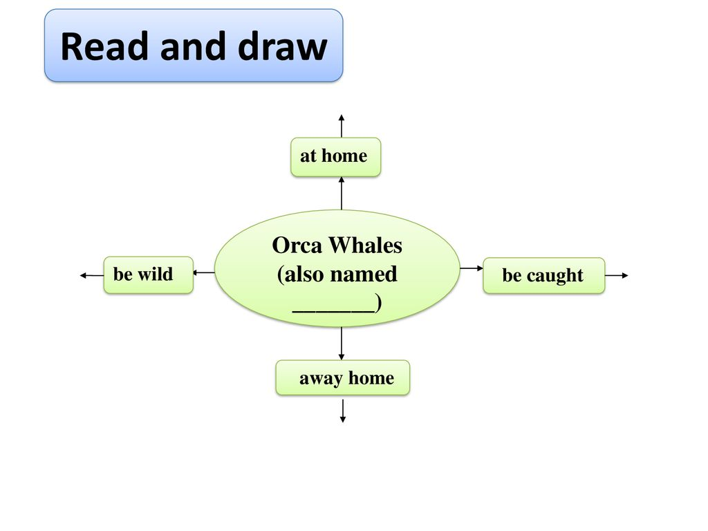 Read and draw Orca Whales (also named _______) at home be wild