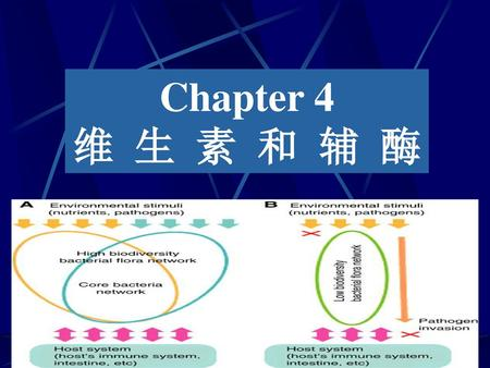 Chapter 4 维 生 素 和 辅 酶.