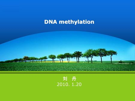 DNA methylation 刘 丹 2010. 1.20.