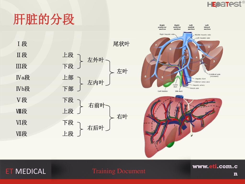 肝脏的分段 www.eti.com.cn ET MEDICAL Training Document