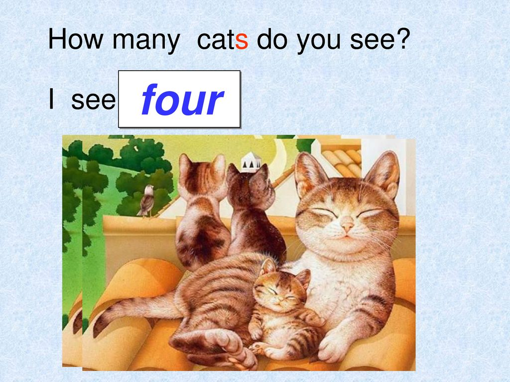 How many cats do you see four I see